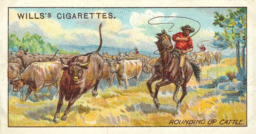 Rounding up Cattle. Illustration for one of a series of cigarette cards on the subject of Overseas Dominions, Australia published by Wills's Cigarettes, early 20th century.