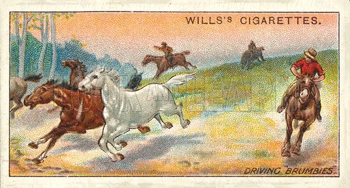 "Driving ""Brumbies"". Illustration for one of a series of cigarette cards on the subject of Overseas Dominions, Australia published by Wills's Cigarettes, early 20th century."