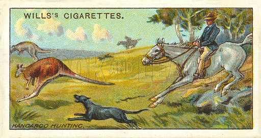 Kangaroo Hunting. Illustration for one of a series of cigarette cards on the subject of Overseas Dominions, Australia published by Wills's Cigarettes, early 20th century.
