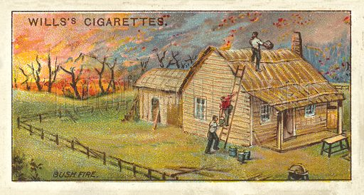 A Bush Fire. Illustration for one of a series of cigarette cards on the subject of Overseas Dominions, Australia published by Wills's Cigarettes, early 20th century.