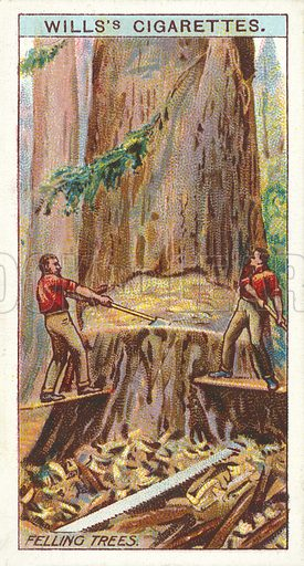 Felling Trees. Illustration for one of a series of cigarette cards on the subject of Overseas Dominions, Canada published by Wills's Cigarettes, early 20th century.