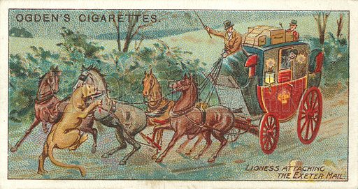 Mail Coach Attacked by a Lioness. Illustration for one of a series of cigarette cards on the subject of the Royal Mail, published by Ogden's Cigarettes, early 20th century.