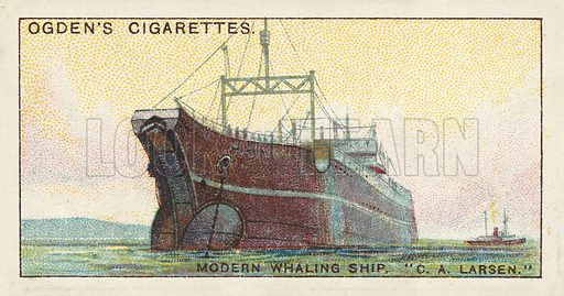 Modern Whaling Ship, C A Larsen. Illustration for one of a series of cigarette cards on the subject of Whaling, published by Ogden's Cigarettes, early 20th century.