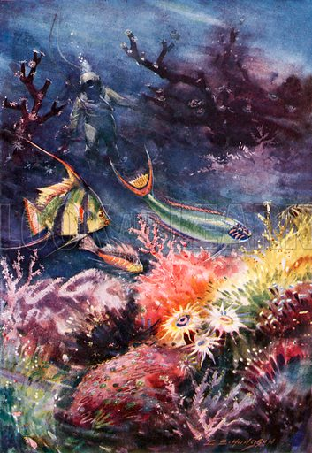 Coral reef, picture, image, illustration