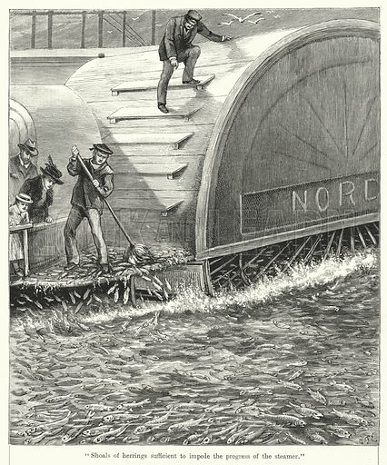 """""""Shoals of herrings sufficient to impede the progress of the steamer."""" Illustration for Chatterbox, 1904."""