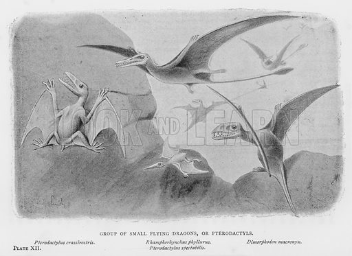 Group of Small Flying Dragons, or Pterodactyls. Pterodactylus crassirostris. Rhamphorhynchus phyllurus. Pterodactylus spectabilis. Dimorphodon macronyx. Illustration for Extinct Monsters by HN Hutchinson with illustrations by J Smit and others (Chapman and Hall, 1893).