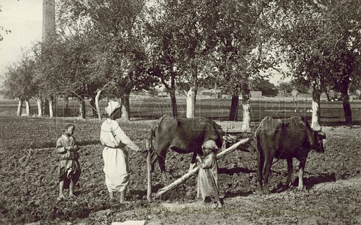 Egyptian Types and Scenes, Ploughing at Heliopolis. Postcard, early 20th century.