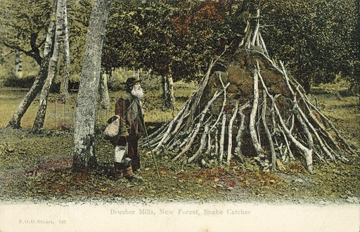 Brusher Mills, snake catcher in the New Forest, Hampshire. Postcard, early 20th century.