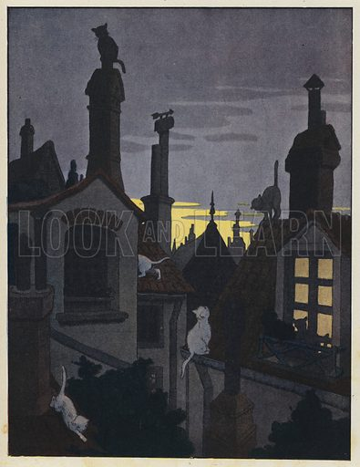 Cats on rooftops at night