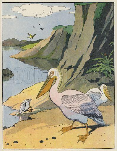 Pelicans. Illustration from Le Buffon Choisi de Benjamin Rabier (Librairie Garnier Freres, Paris, 1932).