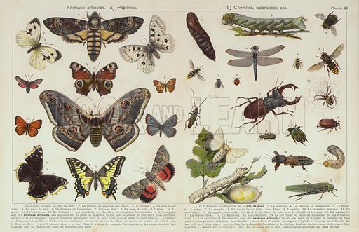 Insects and other invertebrates. Illustration for unidentified children's picture book, c 1900.