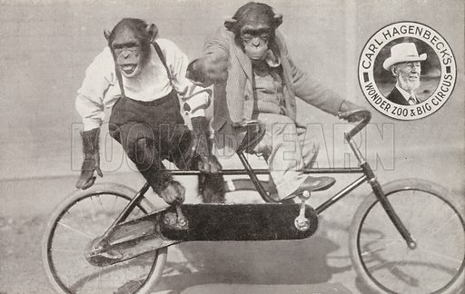 Chimpanzees riding a bicycle, Carl Hagenbeck's Wonder Zoo and Big Circus, Olympia, London. Postcard, early 20th Century.