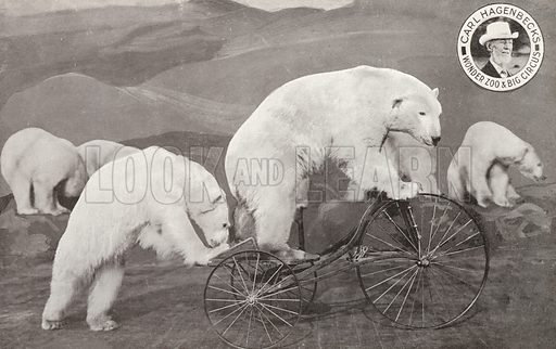 Polar bear riding a tricycle, Carl Hagenbeck's Wonder Zoo and Big Circus, Olympia, London. Postcard, early 20th Century.