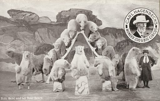 Tilli Bebe and her polar bears, Carl Hagenbeck's Wonder Zoo and Big Circus, Olympia, London. Postcard, early 20th Century.