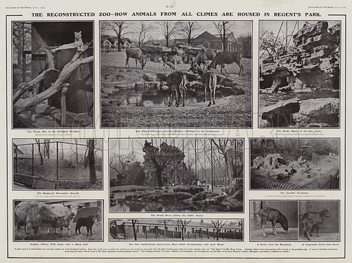 Animals in the reconstructed London Zoo in Regent's Park, 1907. Illustration for The Sphere, Vol 29, 6 April - 29 June 1907.