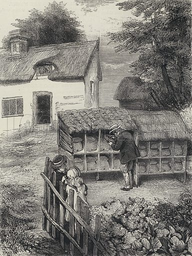 Beekeeper at work. Illustration for The British Workman, 1870.