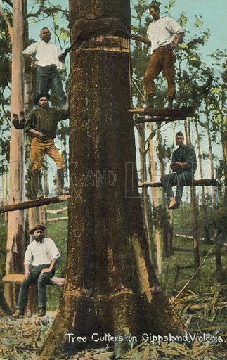 Tree cutters in Gippsland, Victoria, Australia. Postcard, early 20th century.