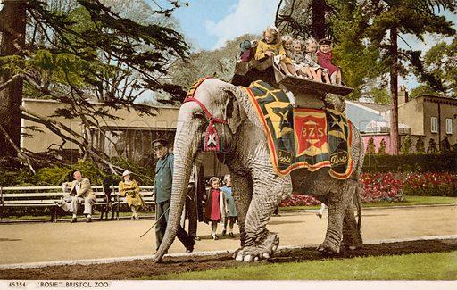 Children enjoying a ride on Rosie the elephant, Bristol Zoo. Postcard, early 20th century.
