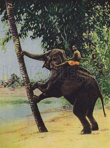Elephant pushing down a tree