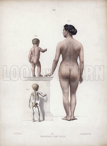Illustration for The Anatomy of the External Forms of Man: Woman and child standing, back view