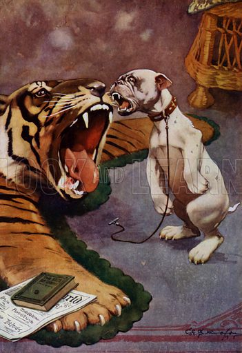 Tiger, Tiger – dog barking at tiger rug
