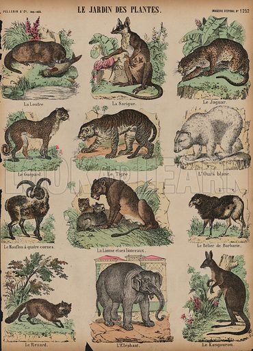 Animals at the Jardin des Plantes, Paris, France. Print published by Pellerin & Cie, Imagerie D'Epinal, late 19th century.