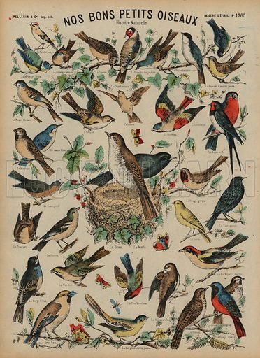 Wild birds. Print published by Pellerin & Cie, Imagerie D'Epinal, late 19th century.