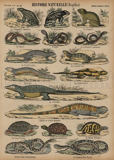 Amphibians and reptiles. Print published by Pellerin & Cie, Imagerie D'Epinal, late 19th century.