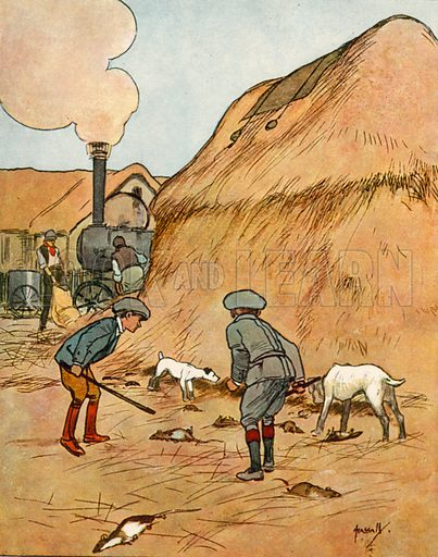 Ratting.  Illustration for Chums by John Hassall (Thomas Nelson, c 1906).