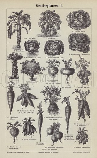 Vegetables.  Illustration from Meyer's Konversations-Lexicon, c1895.