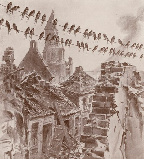Swallows resting on their way south, despite the destruction caused by WW1.  Illustration for The Wonder Book of Wonders (8th edn, Ward Lock, nd).