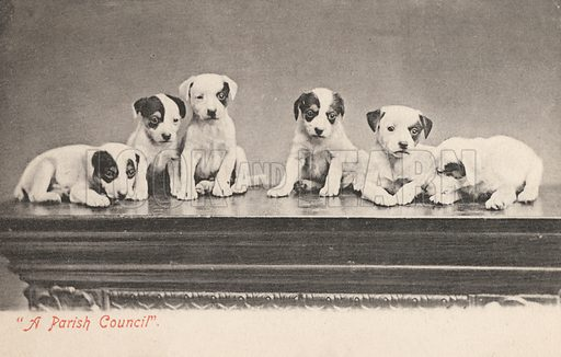 """""""A Parish Council"""", humorous portrait of a group of puppies. Postcard, early 20th century."""