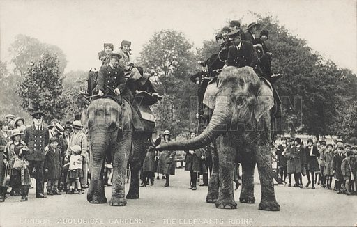 The elephants of London Zoo in Regent's Park. Postcard, early 20th century.