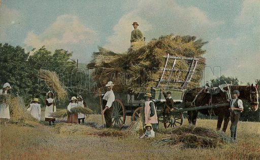 Farm workers harvesting in the fields. Postcard, early 20th century.