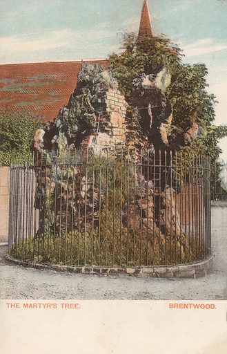 The Martyr's Tree, Brentwood, Essex, where English Protestant martyr William Hunter was burned to death in 1555. Postcard, early 20th century.