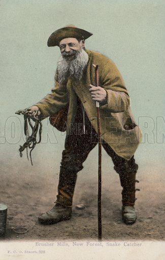 Brusher Mills (1840-1905), snake catcher of the New Forest. Postcard, early 20th century.