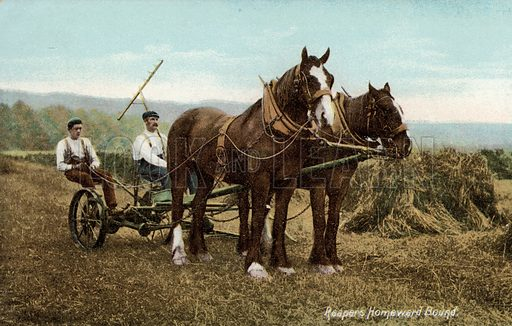 Reapers riding home with the horses after a day bringing in the harvest. Postcard, early 20th century.