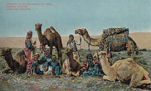 Camel drivers resting with their camels. Postcard, early 20th century.