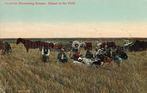 Farm workers eating dinner in the fields during the harvest in Canada. Postcard, early 20th century.