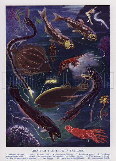 Marine creatures that shine in the dark. Illustration from The Wonder Book of Would You Believe It? (Ward, Lock & Co, Limited, London and Melbourne, c1940).
