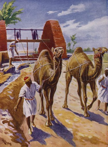 Using camels to draw water from a North African well. Illustration from The Wonder Book of Would You Believe It? (Ward, Lock & Co, Limited, London and Melbourne, c1940).
