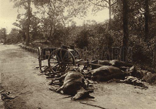 Horses killed by shrapnel during the French retreat in the face of the German Spring Offensive, near Reims, France, World War I, 1918. Illustration from Der Weltkrieg im Bild (Verlag Der Weltkrieg Im Bild, Munich, c1928).