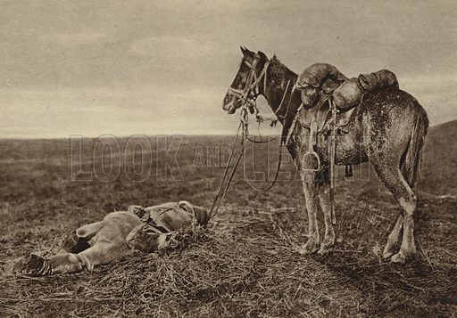 Horse standing beside the body of its dead rider, Wallachia, World War I, 1916. Illustration from Der Weltkrieg im Bild (Verlag Der Weltkrieg Im Bild, Munich, c1928).