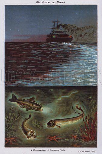 Wonders of the sea: bioluminescence. Illustration from Universum des Himmels, der Erde und des Menschen (F E Bilz, Dresden-Radebeul and Leipzig, c1925).
