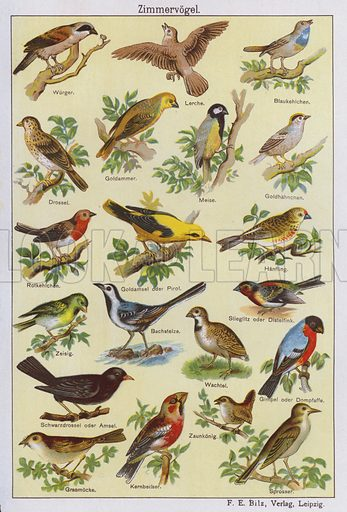 Birds. Illustration from Universum des Himmels, der Erde und des Menschen (F E Bilz, Dresden-Radebeul and Leipzig, c1925).