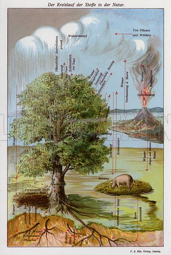 The cycle of substances in nature. Illustration from Universum des Himmels, der Erde und des Menschen (F E Bilz, Dresden-Radebeul and Leipzig, c1925).
