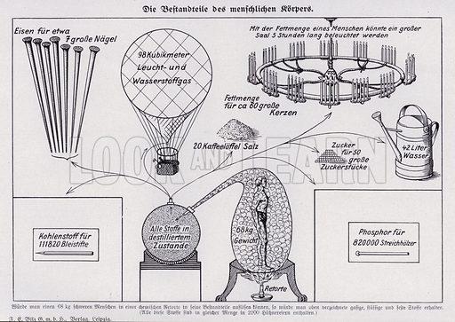 Representation of the quantities of the chemicals that make up the human body. Illustration from Universum des Himmels, der Erde und des Menschen (F E Bilz, Dresden-Radebeul and Leipzig, c1925).