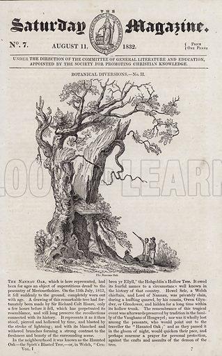 The Nannau Oak. Illustration for The Saturday Magazine, 11 August 1832.