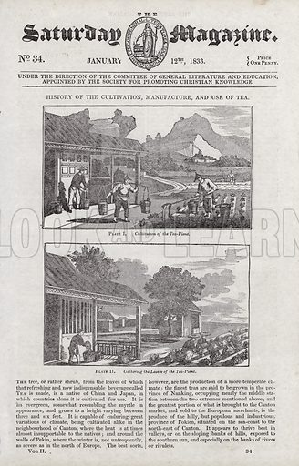 Cultivation, manufacture, and use of tea.  Illustration for The Saturday Magazine, 12 January 1833.