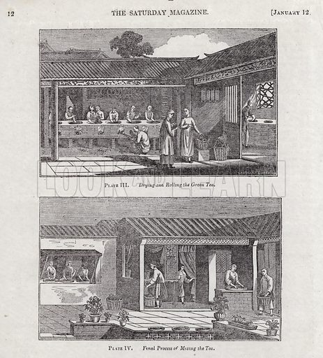Cultivation, manufacture, and use of tea. Illustration for The Saturday Magazine, 12 January 1832.